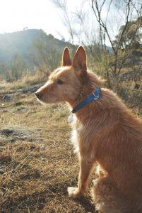 Curro el perro de Gigi handfans