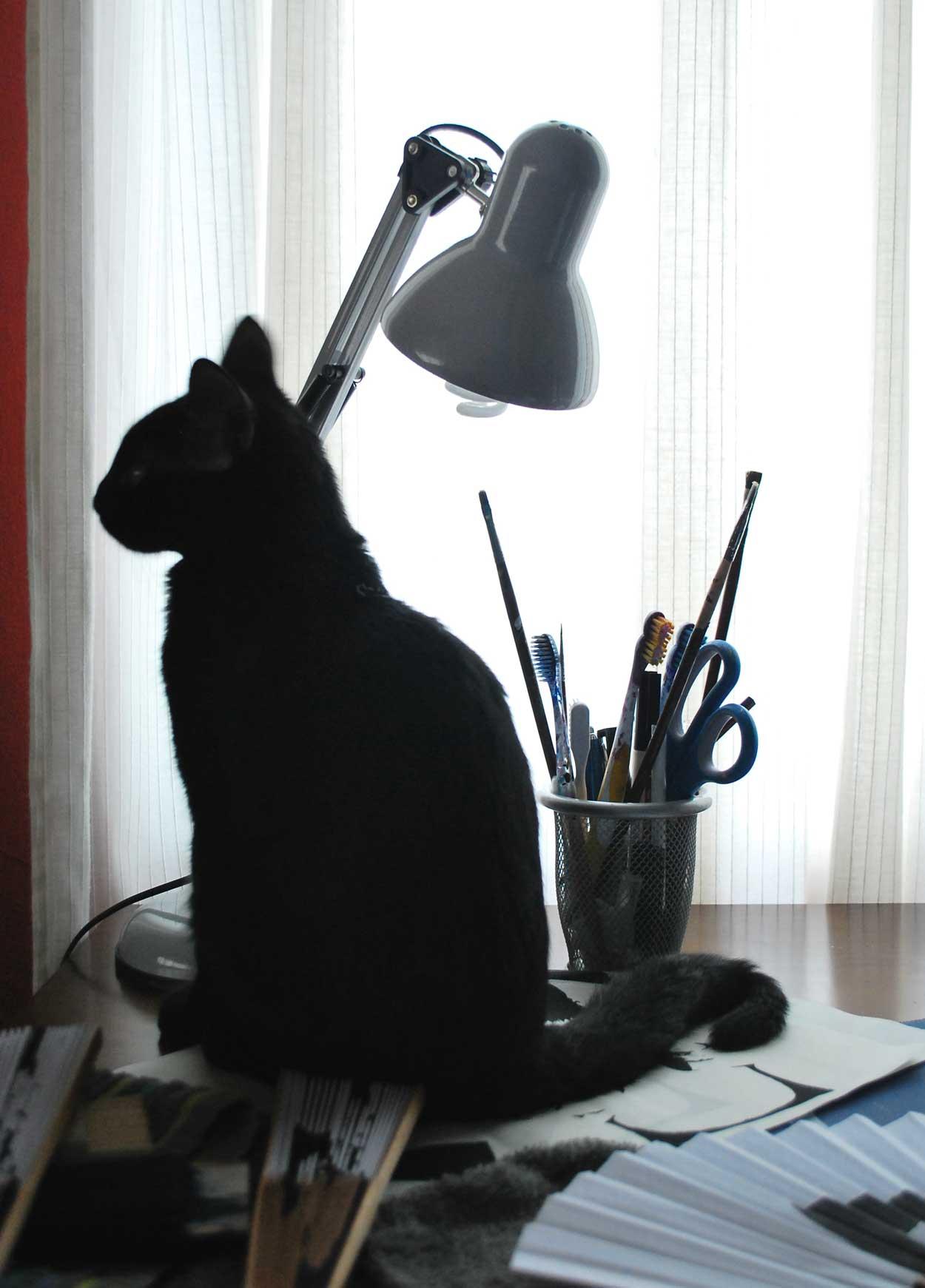 Mi gato Pincho de Gigi hand fans